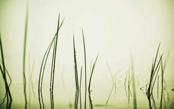 water, трава, widescreen, desktx,