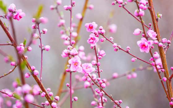 cvety, цветущие, весна, flowers, широкоформатные, веточки, яблони, bing,
