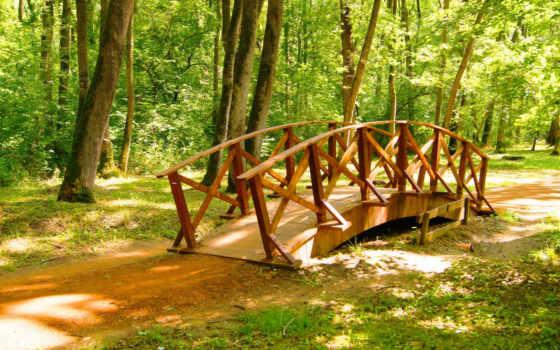 bridges, obrenovac, serbia, природа, park, паркс, фото, zoom,