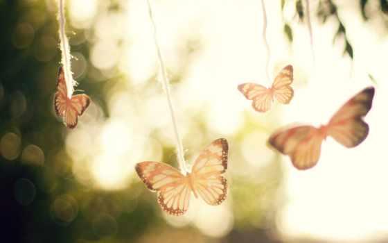 бабочка, настроение, небо, flare, свет, ветер, air, trees, макро