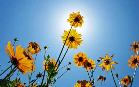 цветы, природа, красавица