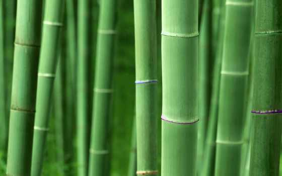бамбук, wallpapersafari, share, explore, seed, изображение,