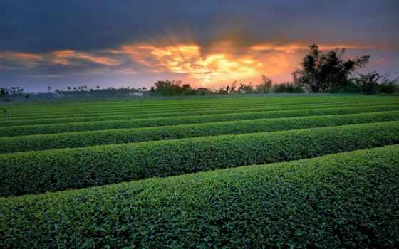 зелёный, закат, поле, ферма, пейзажи -, кусты, sun, небо, crops, trees,