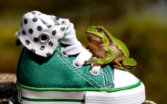 поздравления, днем, физкультурника, спорт, разделитель, туфли,