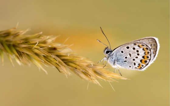 бабочка, насекомые, uma, preview, sair, ajudar, окрас, трава, крылья,