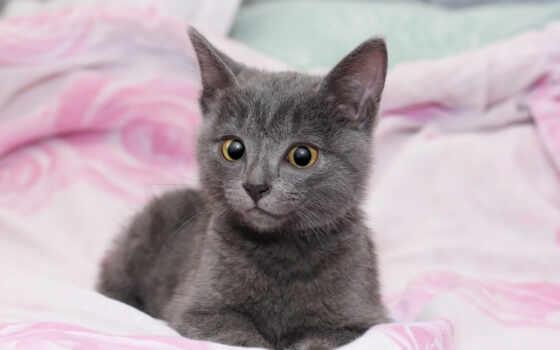 кот, kitty, котенок, chaton, тюлень, cute, animau, fond, серый, little, animal