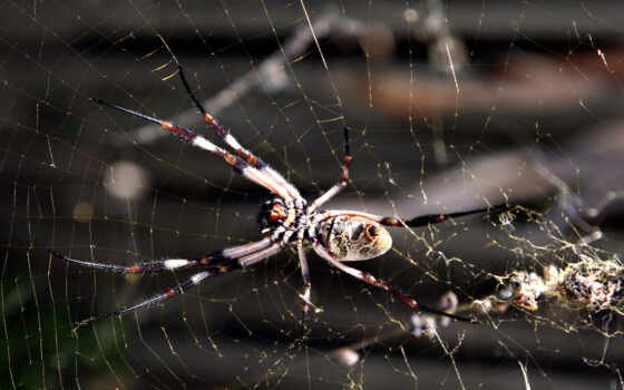 are, animals, spider,
