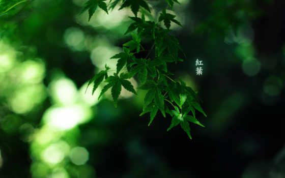 листья, иероглифы, green, burningmonk, colour, иероглиф, симметричные, картинку, красивые,