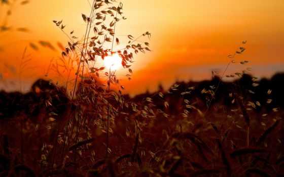 sun, закат, трава