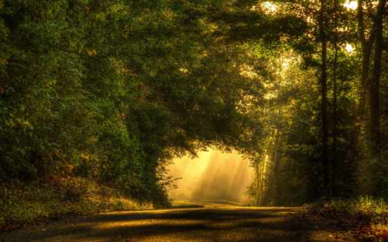 лес, rays, свет