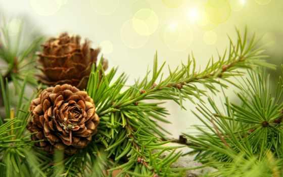 годом, новым, рождеством