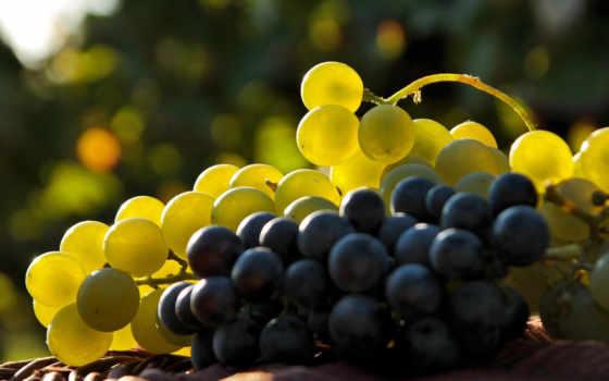виноград, вино, vitis, виноград, ресторан,