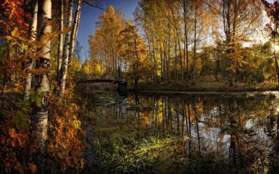 осень, trees, лес, природа, река, листва, мост, пруд, water,