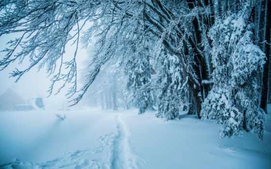 снег, winter, лес, тропинка, природа, trees, snowy,