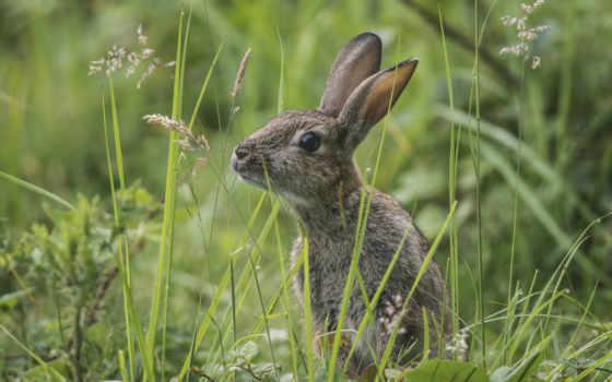 заяц, зайцев, траве