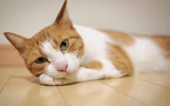 zhivotnye, кот, quebec