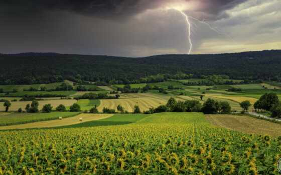 lightning, thunderstorm, scenery, поле, природа, подсолнух, weed