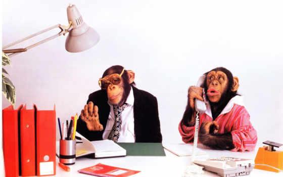 сборник, funny, великолепных, turbobit, free, человека, реклама, подборка, прекрасных, выпуск, ipad, обезьяны, креативная, chimpanzees,