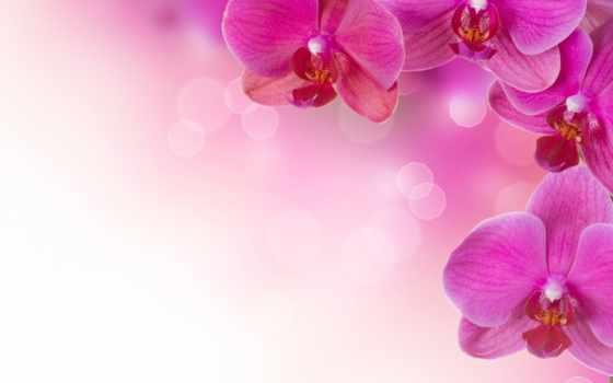 цветы, орхидеи