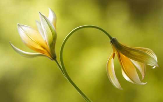 nature, photos, flowers