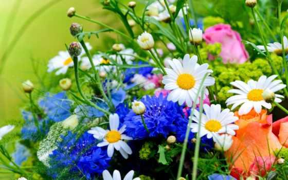 flowers, herbs, resolution