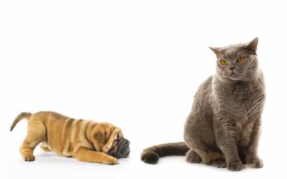 кошки, собаки, нов Фон № 58726 разрешение 1920x1200