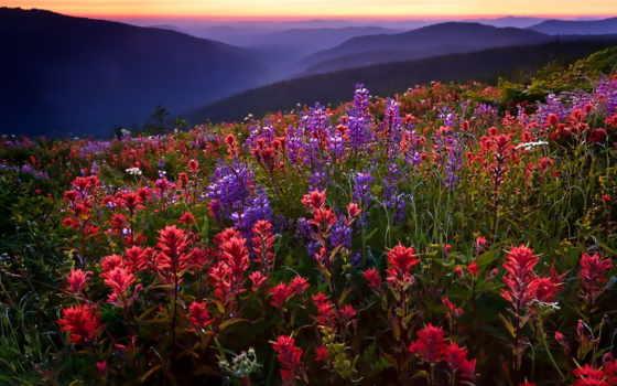 поле, цветы, горы, landscape, природа,