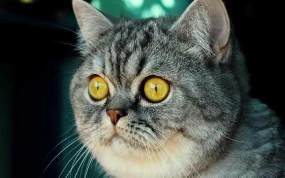 кот, тюлень, котики, котенок, котиков, девушка, that, янв, just, об, british,