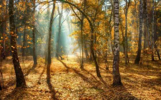лес, добавляем, description, разрешений, высоком, осень, картинкам,