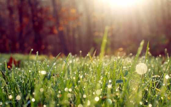 утро, трава, роса, sun, свет, макро, природа, rays,