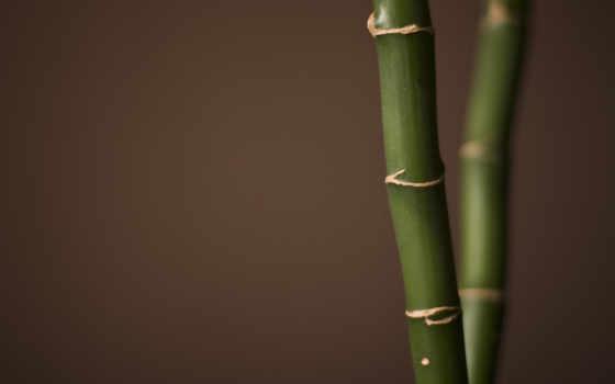 бамбук, miscellaneous, фон, free, fondo, art, more,