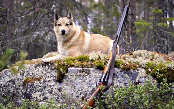 hunting, лес, собака, винтовка,