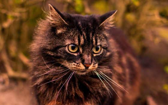 cat, взгляд, gray