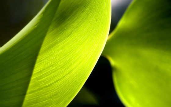 cho, растительность, разные