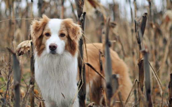собака, природа, друг Фон № 81299 разрешение 1920x1200