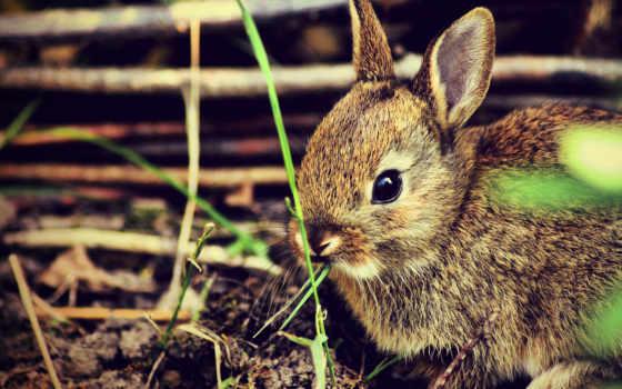 krolik, кролики, испуг, маленький, коллекция,
