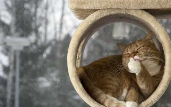 кот, морда, домике, zhivotnye, browse, red, облизываться, ложь, fone, окна,