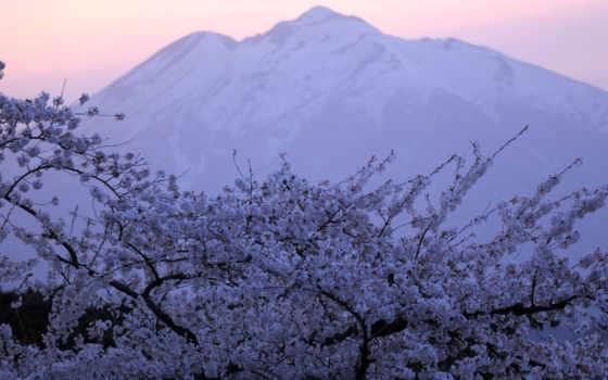 весна, которых, вишней, поговорка, attire, завораживает, удовольствие, имеет, каждого, нашему,
