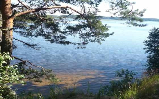 стране, озера, каждой, озеро, природа, сосны, есть, отдыха, целикомв, lipa,
