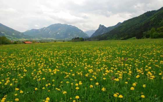 поле, depth, большой, this, photography, photographing, landscapes,