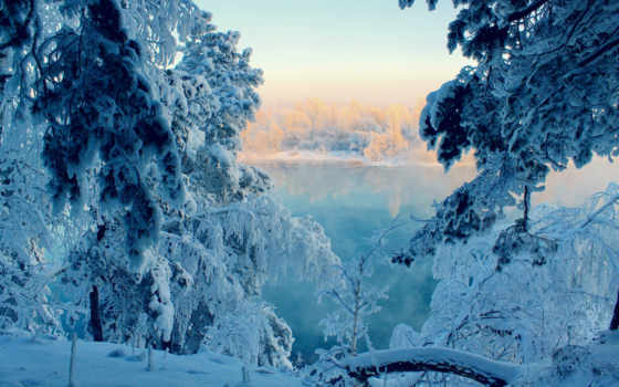 winter, лес, снег, сказ, природа,