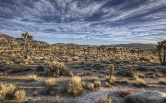 пустыня, прерий, трава, кактусы, небо, горы, пустыни, apple, browse,