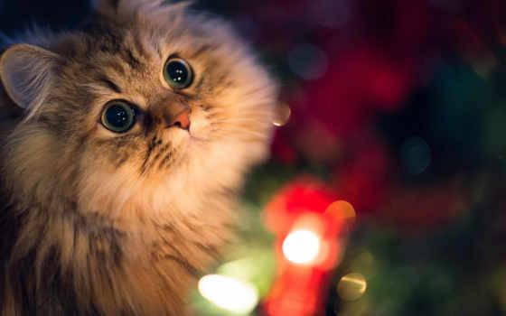 красивые, кошки, torode