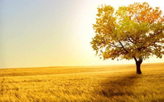 дерево, сказ, абрикосовое, christian, youtube, природа, продолжительность, ezer, авен, landscape,