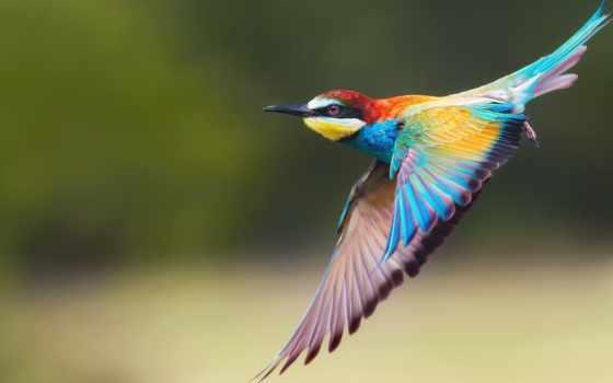 zhivotnye, freetoedit, щурка, птицы, птица, добавил, images,