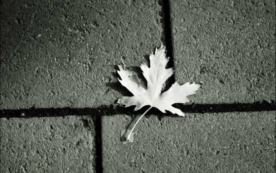 лист, кленовый