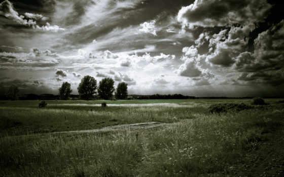 чёрно, белые, trees