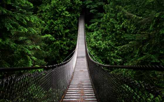мост, подвеска, линн, природа, каньон, лес, лесу,