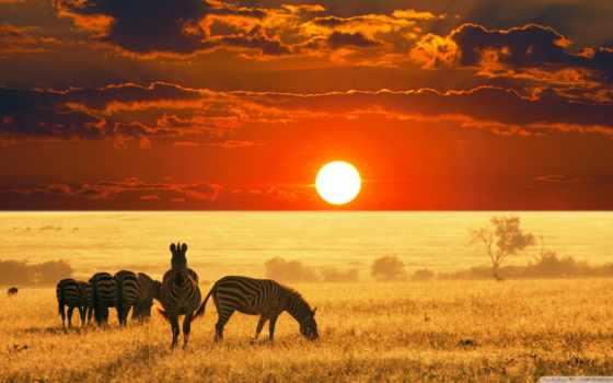 африка, hunting, las