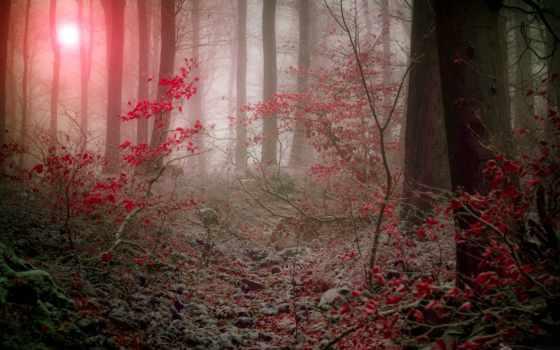осень, лес, поздняя, природа, лесу, утро, туман, winter, ветки, dusk, иней,